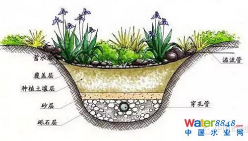 土壤 植物 动物关系图片