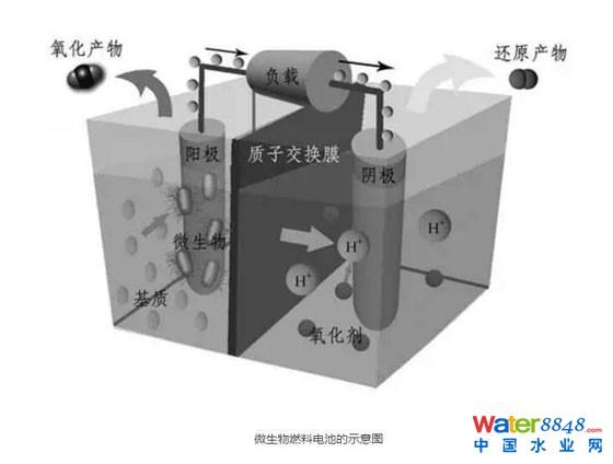 微生物燃料电池的示意图
