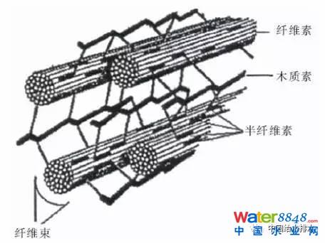 木质纤维素结构