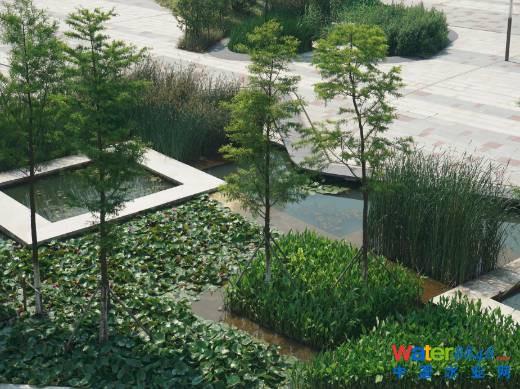 图21 景观水体与雨水调蓄相结合示例 3.2.5建筑与景观小品 广场建筑可采用绿色屋顶;绿色屋顶设置雨水集蓄回用,用于绿色屋顶浇灌。广场建筑外墙,也可设置垂直绿化。 广场建筑雨落管宜优先采用断接方式排水,可采用高位花坛承接雨水也可采用散排形式,利用植草沟等方式将承接或散排的雨水引入海绵设施。 广场海绵设计应与景观设计相结合,确保海绵设施与景观小品的布置既相互融合、协调,又满足景观效果及功能要求。